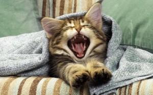 Как отучить кота мешать спать.