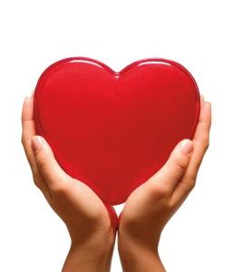 Сердце (The Heart)